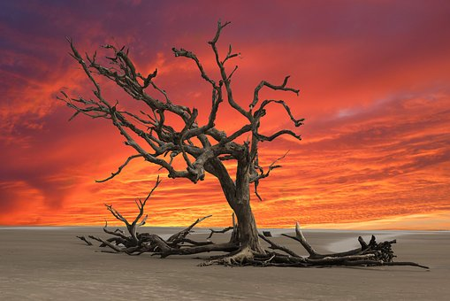 Sunset, Dead Tree, Drought, Landscape, Wasteland, Dry