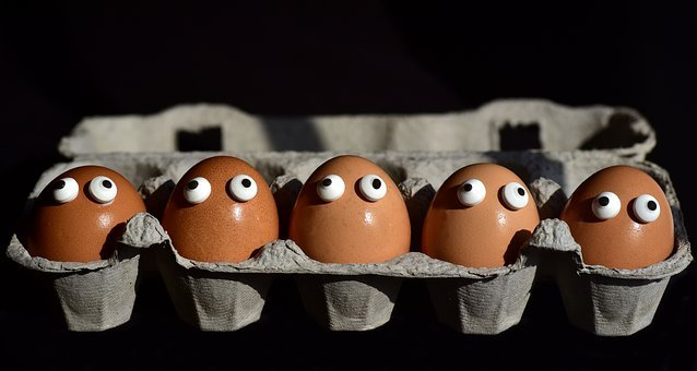 Egg, Egg Box, Egg Carton, Eggs Heads, Funny, Sweating
