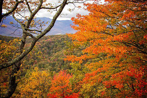 Fall, Autumn, Leaves, Nature, Forest, Colorful, Tree