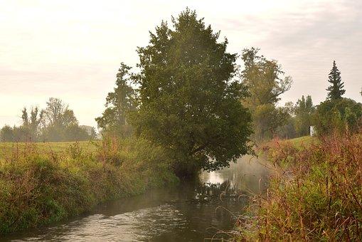 Trees, Fog, Autumn, Sky, Clouds, Moist, Landscape