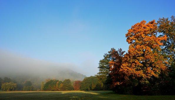 Fog, Morgenstimmung, Sunrise, Autumn, Park