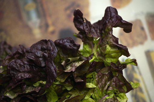 Lettuce, Oak Leaf, Vegetables, Healthy, Fresh, Food