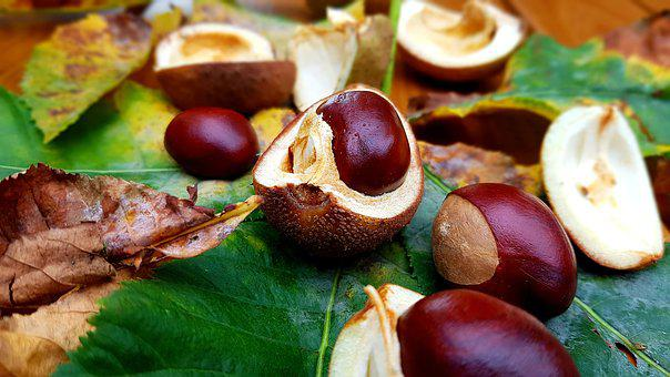 Chestnut, Horse Chestnut, Fruiting Bodies, Leaves
