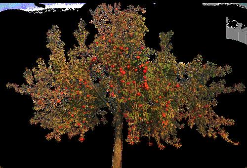 Apple Tree, Apple, Leaves, Autumn, Fruit, Isolated