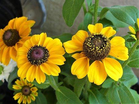 Yellow, Herb Flower, Sunny Yellow, Late Summer, Idyllic