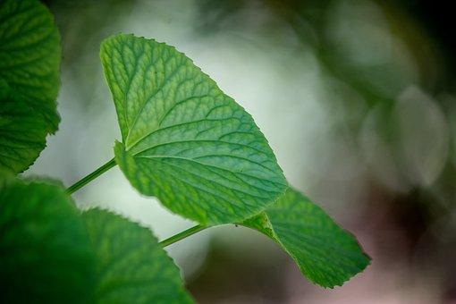 Leaves, Leaf, Bokeh, Nature, Plant, Natural, Texture