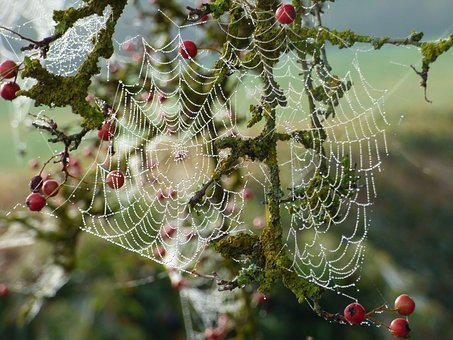 Canvas, Spider, Nature, Insects, Dew, Autumn, Drop