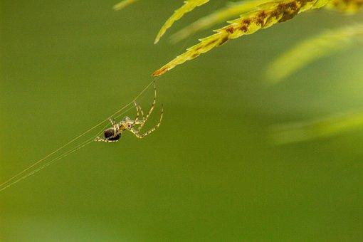 Macro, Spider, Insect, Arachnid, Cobweb, Nature, Green