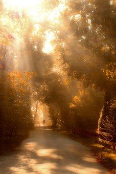 Walk, Sunbeam, Nature, Forest, Mood, Sun, Trees, Autumn