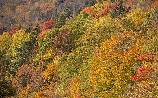 Fall, Autumn, Trees, Nature, Forest, Colorful, Leaf