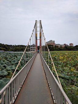 Bridge, Lotus, Park