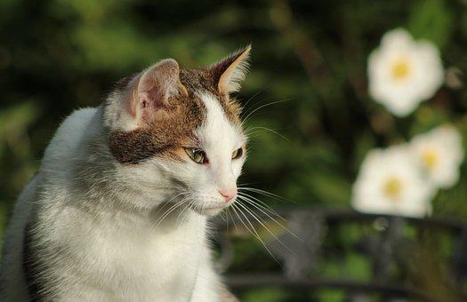 Cat, Cats, Pet, Portrait