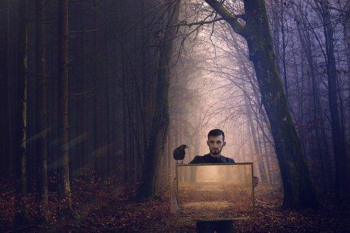 Forest, Raven, Picture, Nature, Bird, Autumn