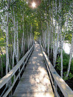 Trees, Boardwalk, Planks, Sunlight, Walkway, Passage