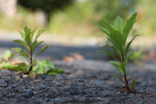 Plant, Concrete, Recapture