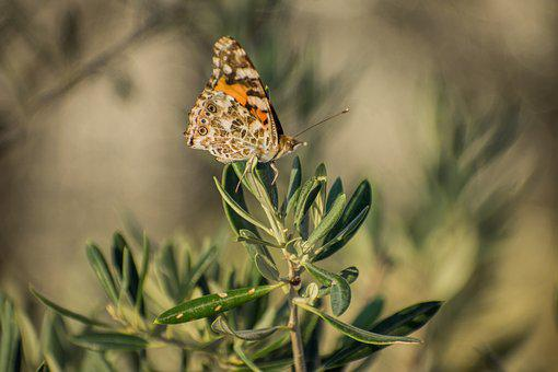 Butterfly, Plants, Insects, Beauty, Summer, Nature