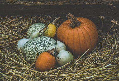 Pumpkins, Autumn, Pumpkin, Decoration, Thanksgiving