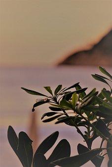 Beach, Sea, Sunrise, Summer, Water, Vacations, Ocean