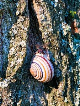 Snail, Nature, Wood