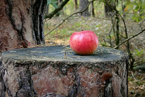 Tree, Trunk, Apple, Forest, View
