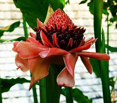 Exotic, Plant, Flower, Blossom, Bloom, Tropics