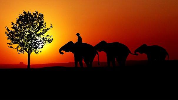 Sunset, Nature, Elephants, Mahout, Tree, Sun, Twilight
