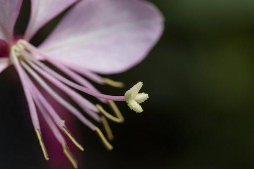 Flowers, Wildflower, Nature, Plants, Petal, Colorful