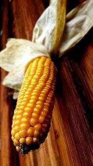 Corn, Corn On The Cob, Yellow, Ripe, Involucral Bracts
