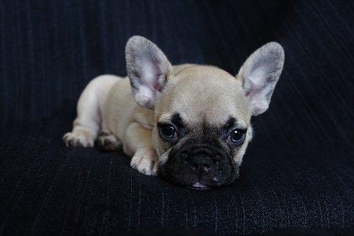 Dog, Puppy, Pet, Animals, Nice, Brown, Sad, Portrait