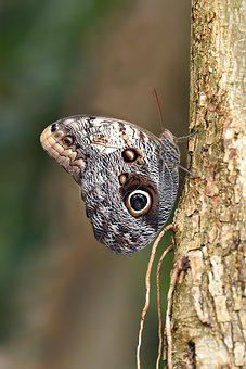 Butterfly, Kelebek, Macro, Wallpaper, Doğa, Nature