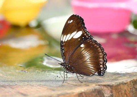 Butterfly, Kelebek, Doğa, Böcek, Nature, Wallpaper