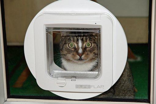 Cat Flap, Domestic Cat, Pet, Cat, Mackerel, Cat's Eyes
