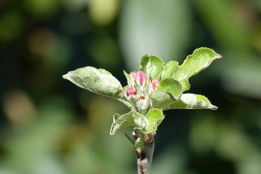 Blossom, Bloom, Bud, Spring, Plant, Close Up, Leaves