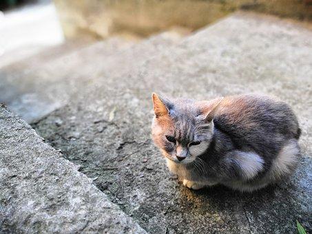 Cat, Day, Kitten, Pets, Housecat, Animals, Feline, Cute