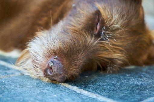Dog, Sleep, Dead, Reach, Fly, Furry, Skin, Nose