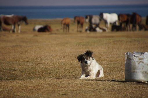 Kyrgyzstan, Song Kul, Landscape, Horse, Dog
