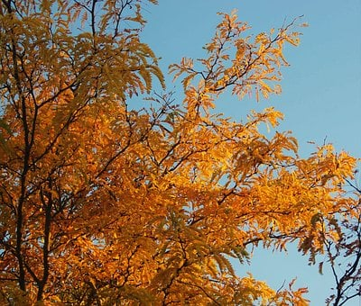 Autumn, Golden, Leaves, Falling Leaves, Nature, Fall