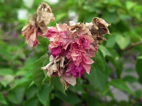 Glosbe, On Glosbe Flowers, Flower, Tree Paper Flowers