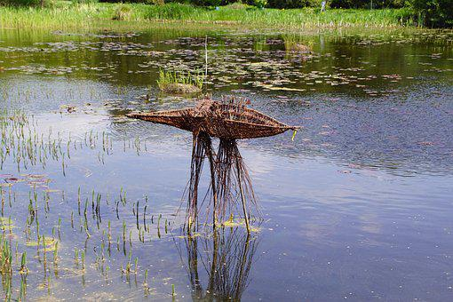 Lake, Pond, Wicker, Water, Flower, Plant, Water Lily