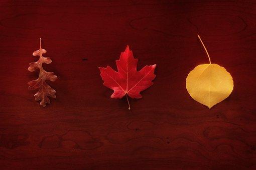 Leaves, Autumn, Maple, Oak, Aspen, Seasonal, Foliage