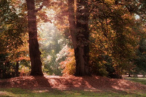 Autumn, Glade, Forest, Nature, Landscape, Mood, Trees