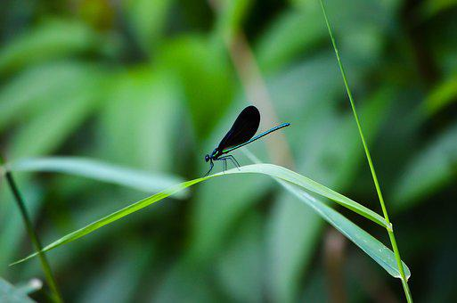 Dragonfly, Bug, Green, Nature, Insect, Wing, Wings