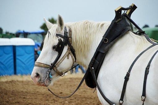 Horse, A Workhorse, Animal, Mammal, Labour, Earth