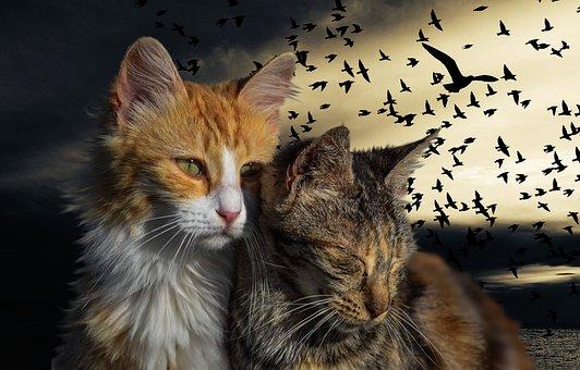 Kitten, Cats, Pet, Birds, Gimp