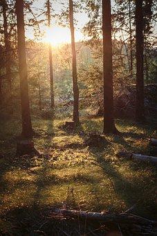 Evening, Tree, So, Sunset, Nature, Dusk, Sky, Landscape