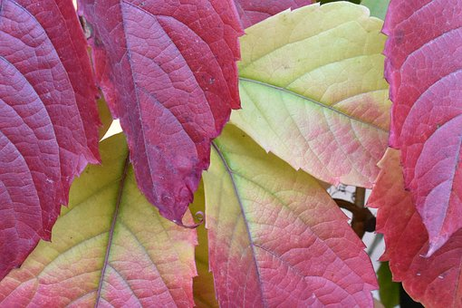 Autumn, Leaves, Colorful, Beauty, Multicolor, Red