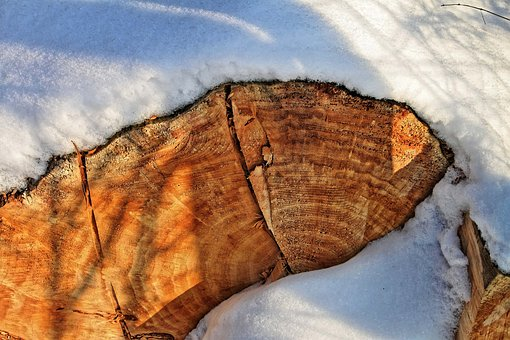 Snow, Log, Annual Rings, Winter, Wood, Landscape