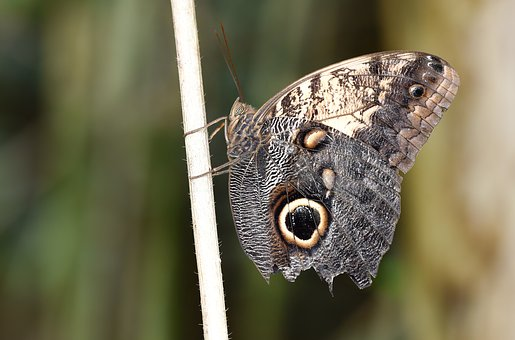 Butterfly, Kelebek, Doğa, Nature, Wallpaper, Macro