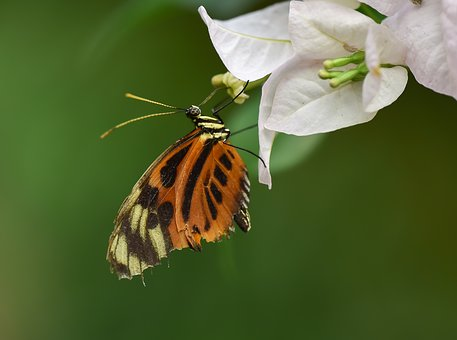 Kelebek, Butterfly, Böcek, Macro, Doğa, Nature