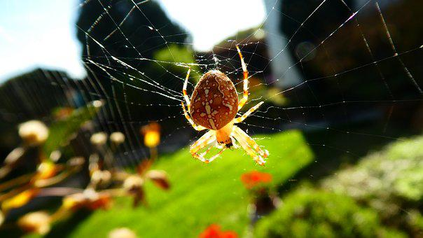 Spider, Nature, Animal, Insect, Web, Close Up, Arachnid